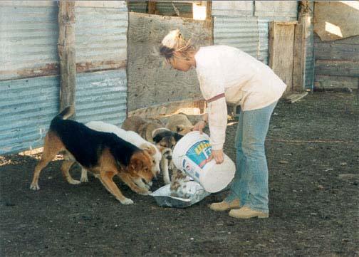 Feeding the dogs